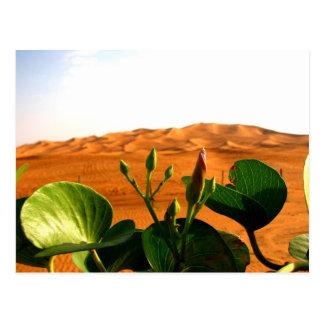 Sand and flowers in Dubai, United Arab Emirates Postcard