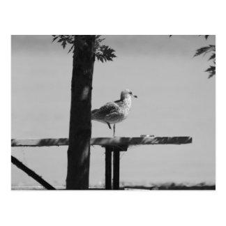 Sand Bar Sea Gull Postcard
