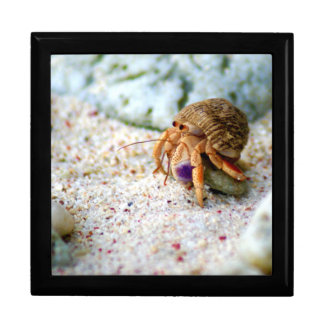 Sand Crab, Curacao, Caribbean islands, Photo Gift Box