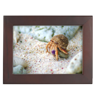 Sand Crab, Curacao, Caribbean islands, Photo Keepsake Box