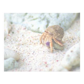 Sand Crab, Curacao, Caribbean islands, Photo Letterhead