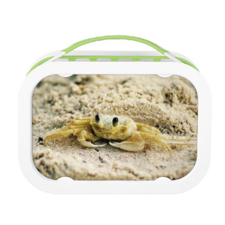Sand Crab, Curacao, Caribbean islands, Photo Lunch Boxes
