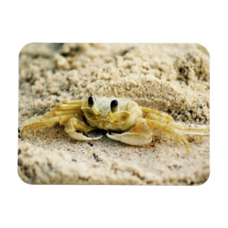 Sand Crab, Curacao, Caribbean islands, Photo Magnet