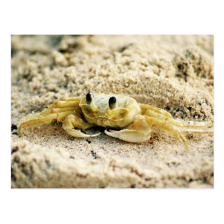 Sand Crab, Curacao, Caribbean islands, Photo Postcard