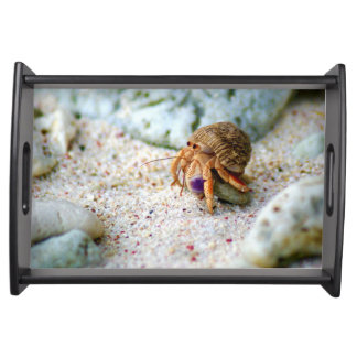 Sand Crab, Curacao, Caribbean islands, Photo Serving Tray