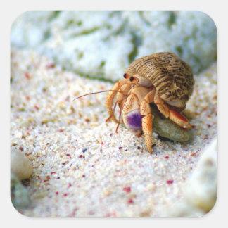 Sand Crab, Curacao, Caribbean islands, Photo Square Sticker