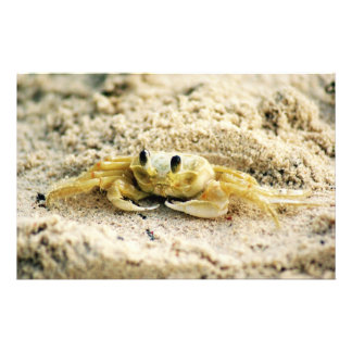 Sand Crab, Curacao, Caribbean islands, Photo Stationery