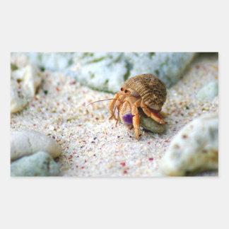 Sand Crab, Curacao, Caribbean islands, Photo Sticker