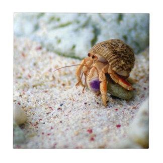 Sand Crab, Curacao, Caribbean islands, Photo Tile