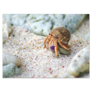 Sand Crab, Curacao, Caribbean islands, Photo Tissue Paper