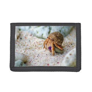 Sand Crab, Curacao, Caribbean islands, Photo Trifold Wallet