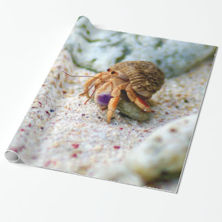 Sand Crab, Curacao, Caribbean islands, Photo Wrapping Paper