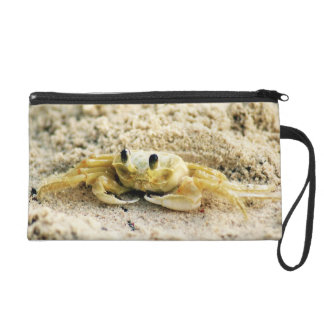 Sand Crab, Curacao, Caribbean islands, Photo Wristlets