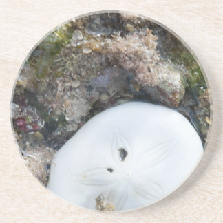Sand Dollar in a Fiji Reef at Low Tide Drink Coasters