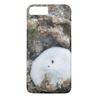 Sand Dollar in the Fiji Reef at Low Tide iPhone 7 Plus Case