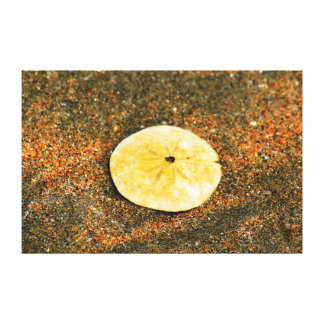 SAND DOLLAR SHELL ON BEACH QUEENSLAND  AUSTRALIA CANVAS PRINT