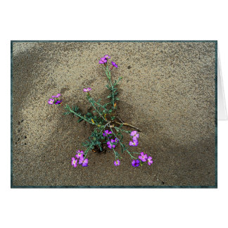 Sand dune flowers card