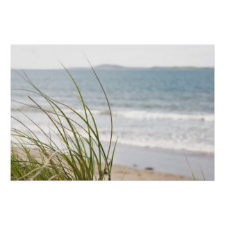 sand dune grass view poster