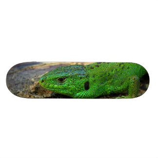 Sand Lizard Male Lacerta Agilis Skate Boards