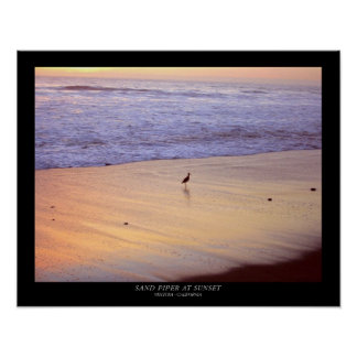 Sand Piper at Sunset : Ventura - California Poster
