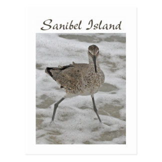 Sand Piper Sanibel Island Postcard