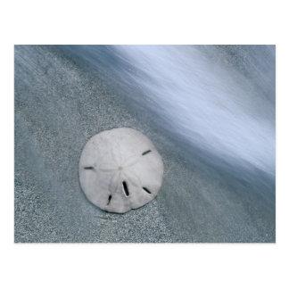 Sanddollar on Beach | Sanibel Island, Florida Postcard