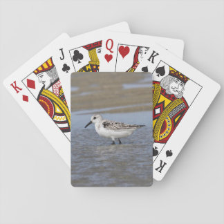 Sanderling Playing Cards