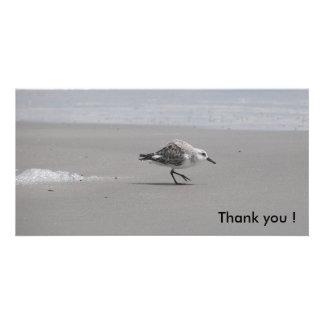 Sanderling, Thank you ! Card