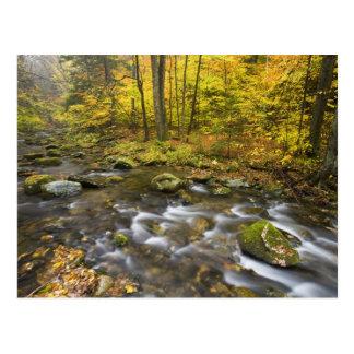Sanderson Brook.  Chester-Blanford State Forest. Postcard