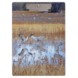 Sandhill Crane Birds Wildlife Animals Clipboard
