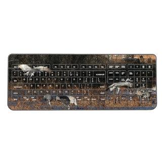 Sandhill Crane Birds Wildlife Animals Keyboard
