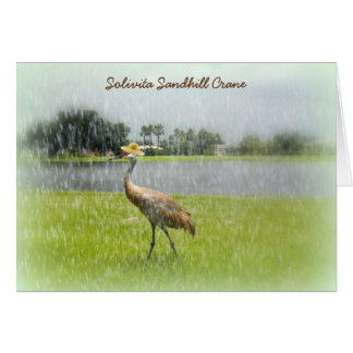 Sandhill Crane in the Rain! Solivita Poinciana FL Card