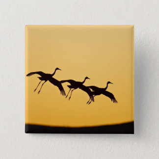 Sandhill Crane landing at sunset 2 Inch Square Button