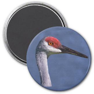 Sandhill Crane Lovely Lady Magnet