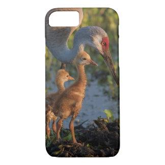 Sandhill crane with chicks, Florida iPhone 7 Case