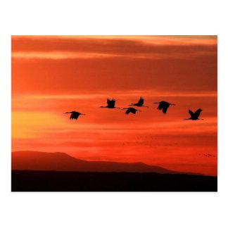 Sandhill Cranes at Sunset Postcard