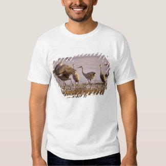 Sandhill Cranes Grus canadensis) Platte Shirt