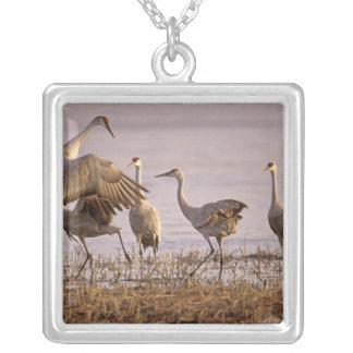 Sandhill Cranes Grus canadensis) Platte Square Pendant Necklace