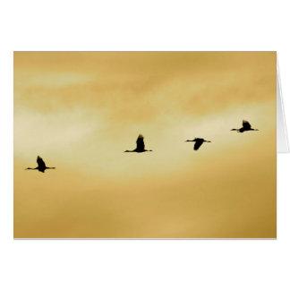 Sandhill Cranes in New Mexico Card