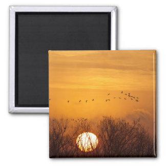 Sandhill cranes silhouetted aginst rising sun magnet