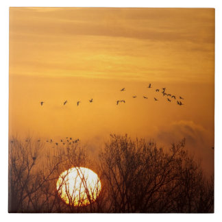 Sandhill cranes silhouetted aginst rising sun tiles