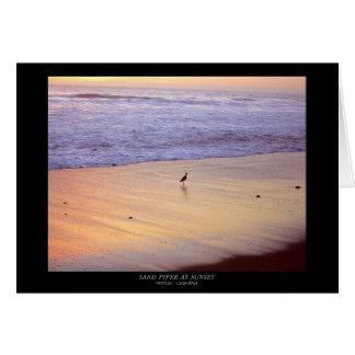 Sandpiper at Sunset: Ventura Beach Card