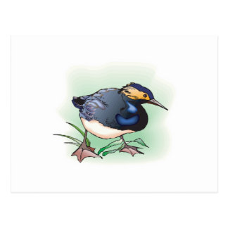 sandpiper bird postcard