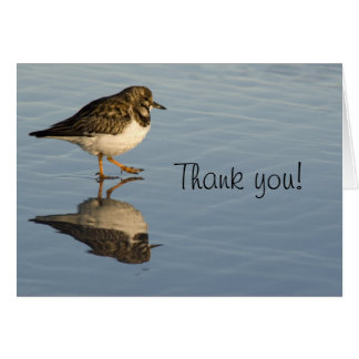 Sandpiper Bird Thank You Greeting Card