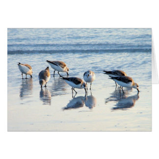 Sandpipers Card