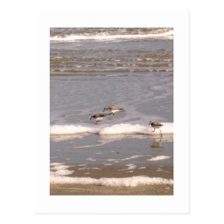 Sandpipers Postcard
