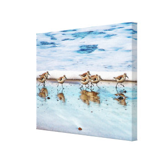 Sandpipers Running Along The Beach Canvas Print