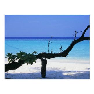 Sandy Beach 8 Postcard