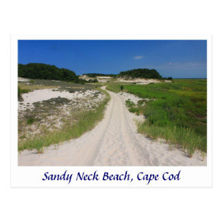 Sandy Neck Marsh Trail, Sandy Neck Beach, Cape Cod Postcard