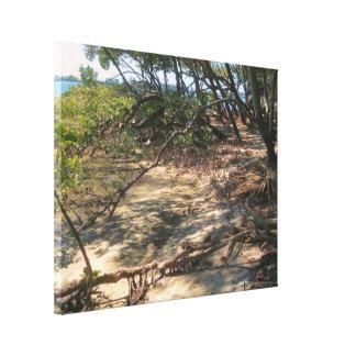 Sandy Path through the Mangroves Canvas Print